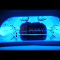 Żarówka do lamp UV